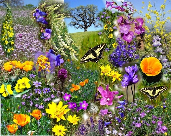 01-0520spring20flowers20web