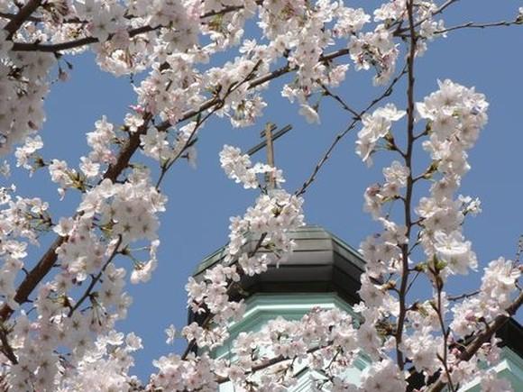 japan480_Kupol_v_Kioto_i_sakura
