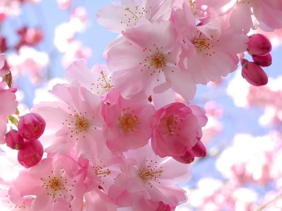 11-spring