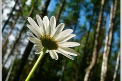 Незаметный цветок в огромном лесу. О книге философа С.Кьеркегора