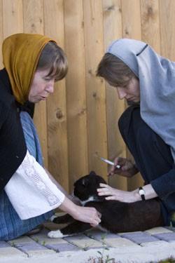 Кошек здесь не только кормят, но и следят за состоянием их здоровья