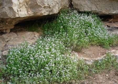 Весна в Иудейской пустыне