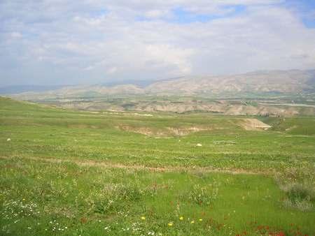 Цветущая Иудейская пустыня