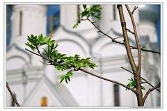 Великая весна церковного года