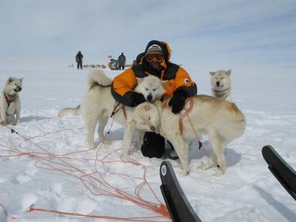 Через Гренландию на собачьих упряжках