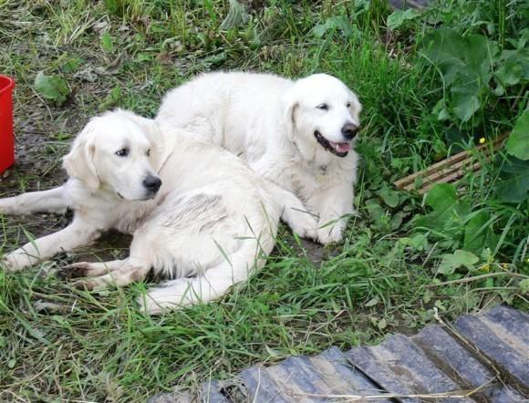 Лечебные собаки