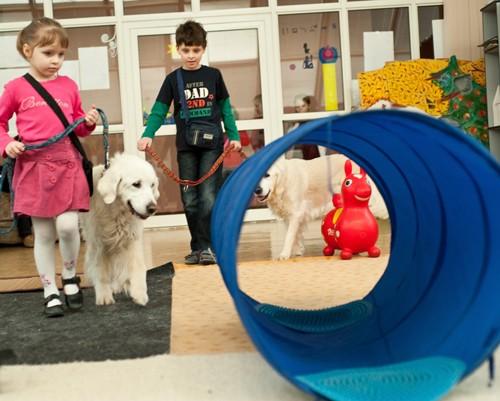 Андрюша раньше очень ревниво относился к тому, что его младшая здоровая сестренка тоже занимается с собаками. Сейчас позволяет ей работать вместе с собой