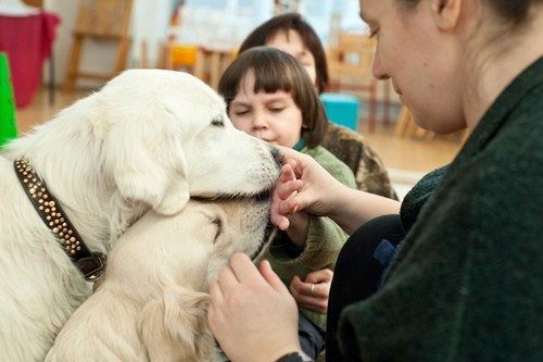За хорошую работу собакам полагается лакомство. У ребенка, когда он достает печенье из сумочки и подает его животному, развивается мелкая моторика