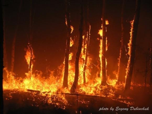 Пожар в лесу в Йошкар-Оле