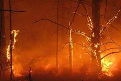 Пожары в России: вести от наших читателей (публикация обновляется)