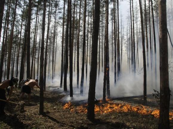 Жители стараются затушить горящий лес