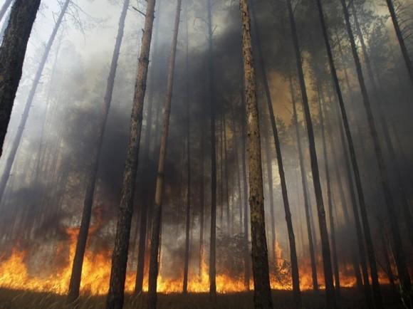 Пригород Воронежа - горят леса