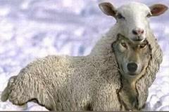 Экстремизм в овечьей шкуре