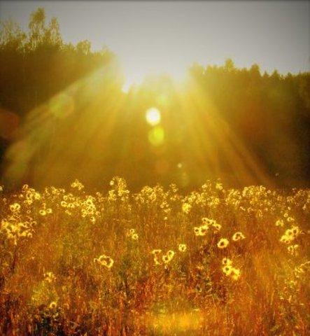 солнечные картинки: