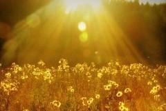 Солнечный