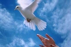 Прощение – освобождение