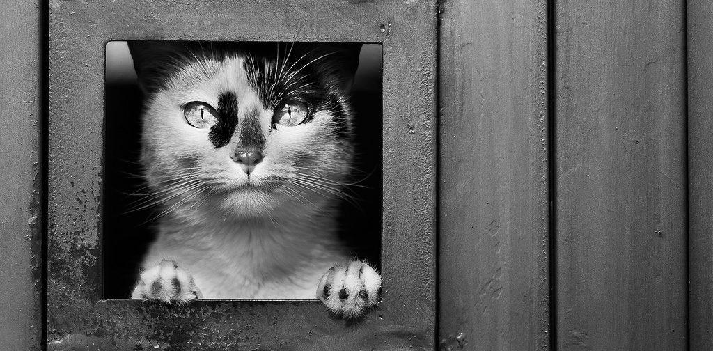 О котах и кошках. Пять историй
