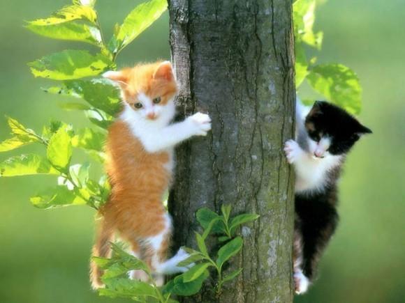 http://www.pravmir.ru/wp-content/uploads/2011/05/free_pussy_cat_screensaver-686421-580x435.jpg