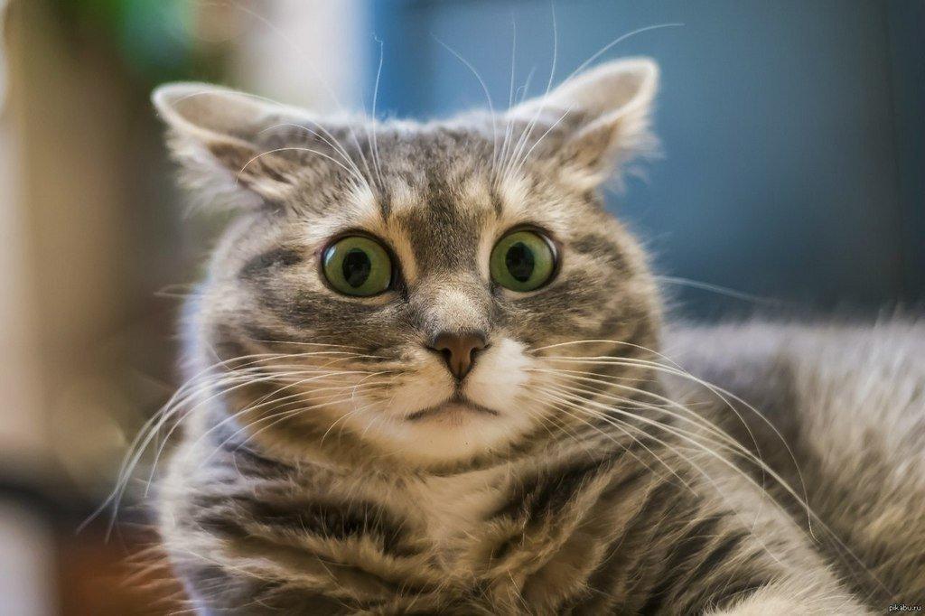 Если в кота кинуть тапком