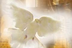 Белые крылья молитвы