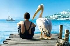 Пеликан. Летняя притча о птицах