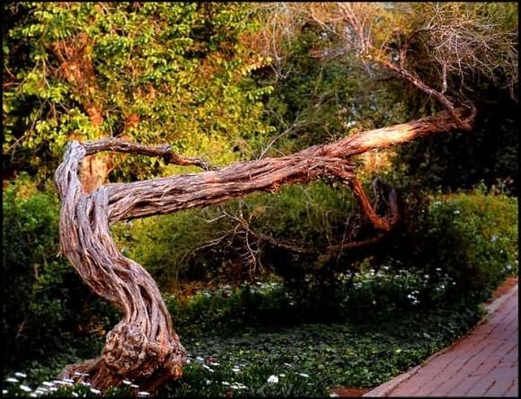 Просидеть, можете представить. Патриарх жедетском саду. photosight…