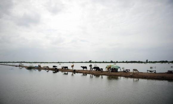 Наводнение в Пакистане (7)