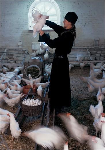 На ферме. Курятник. 2000 г.  ©Сергей Компанийченко, фото с сайта http://www.valaam.ru
