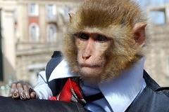 Еще раз о происхождении от обезьяны