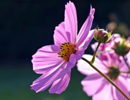 сотворение мира по Библии. Цветы