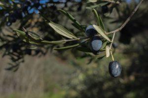 Что можно в пост, можно ли в пост оливки?