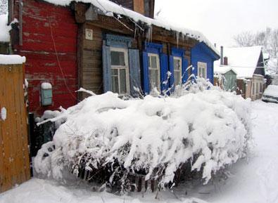 Зимний жасмин