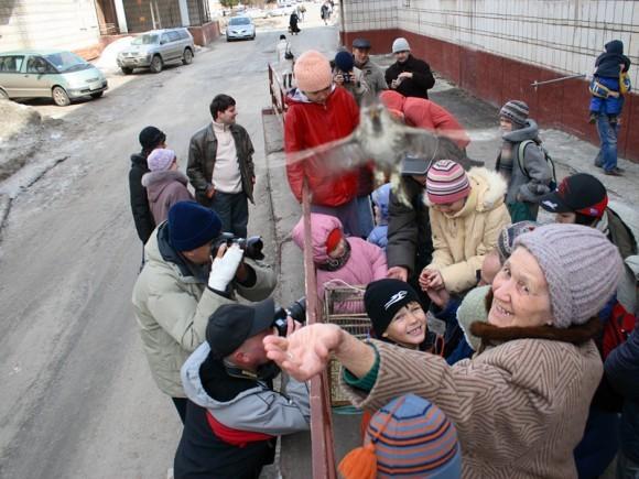 Благовещенские птицы. Фото священника Дионисия Землянова photosight.ru