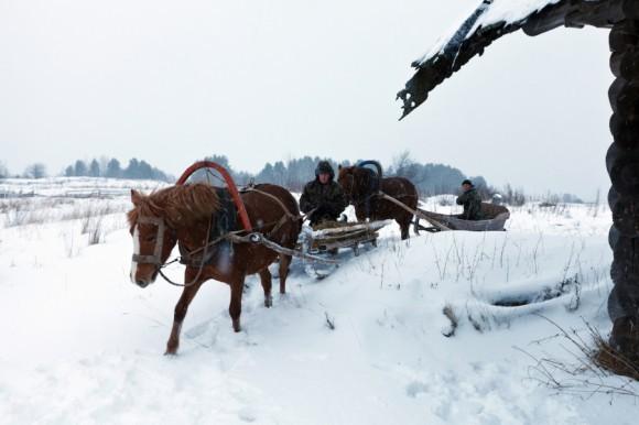 Лошади. Деревня Карпово, Плесецкий сектор Кенозерского Национального Парка. Автор: Виктория Тимохина