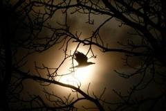 Солнечное затмение — Фото