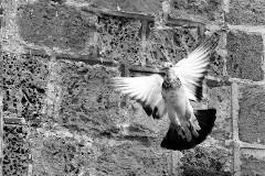 Пятидесятница: просто умереть за Христа