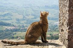 Православный священник, мусульманский кот