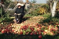 Яблоки, виноград и пампасная трава