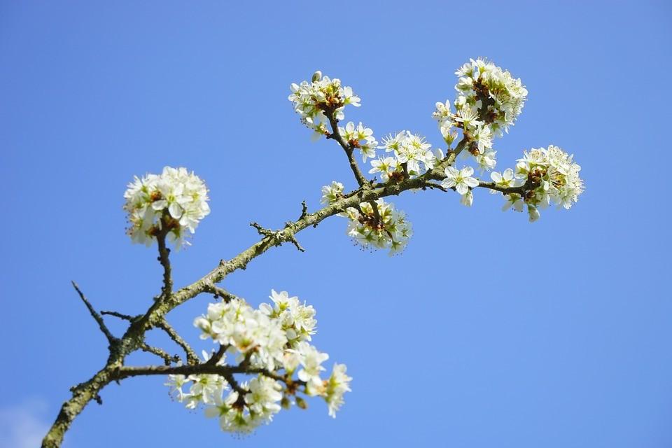 Неопалимая купина. Цветы