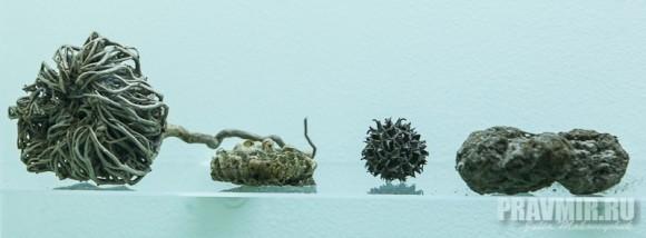 Образцы: губки, корень, засушеный плод из коллекции П.А.Флоренского. 1910-1920-е