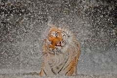 Лучшие фотографии 2012 года от National Geographic