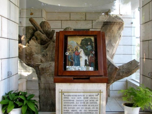 Дерево Закхея в Иерихоне