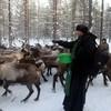 Сотрудники Архангельской епархии совершили миссионерскую поездку к таежным оленеводам