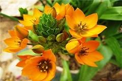 Цветок агавы, или Учиться радости