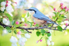 Красная горка в 2019 году – 5 мая: соблазн язычеством или добрая встреча весны?
