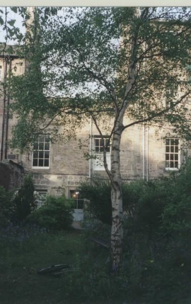 Внутренний дворик с березой