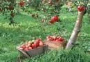 Яблочный Спас в 2018 году. Для чего на Преображение освящают яблоки?