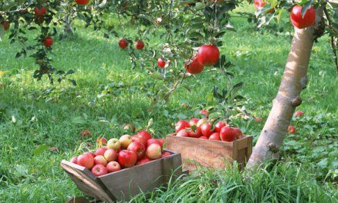 Яблочный Спас в 2017 году