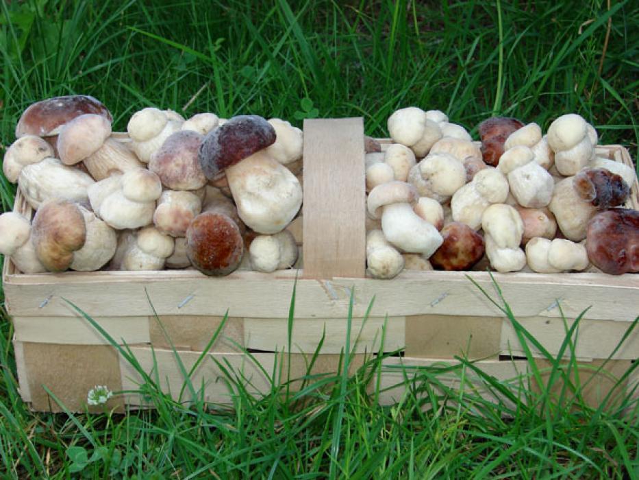 Отравление грибами в селе Романовка 3 июля уже повлекло за собой два