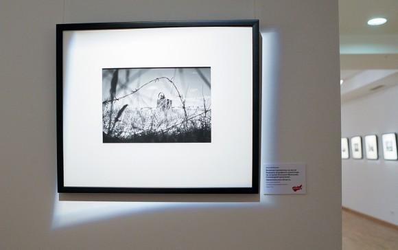 Колючая проволока на месте бывшего штрафного изолятора на острове Большая Муксалма, Соловецкий архипелаг. Фото Алексея Мякишева